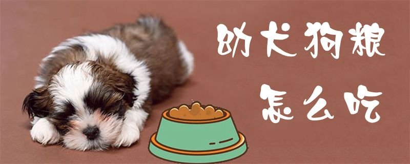 幼犬狗粮怎么吃1